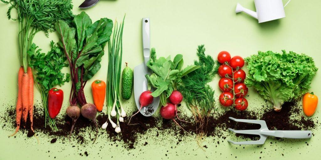 Top Tips How To Grow A Small Organic Garden